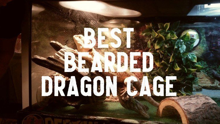 best bearded dragon cage