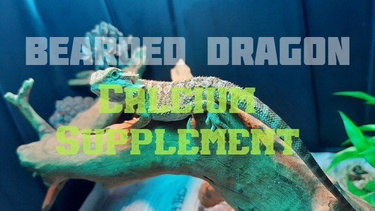 Bearded Dragon Calcium Feature Image