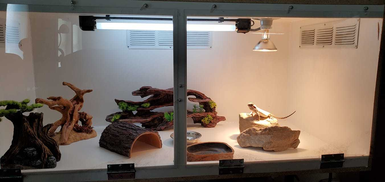 Light setup for bearded dragons