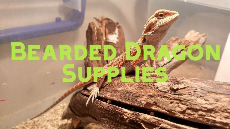 bearded dragon supplies and accessories