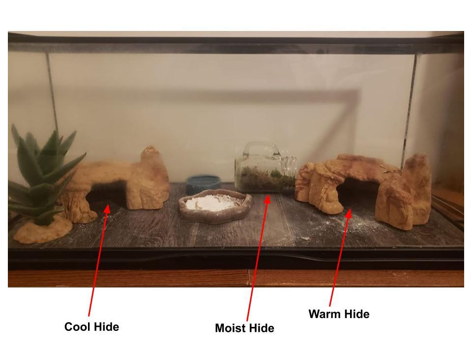 Leopard gecko hide placement