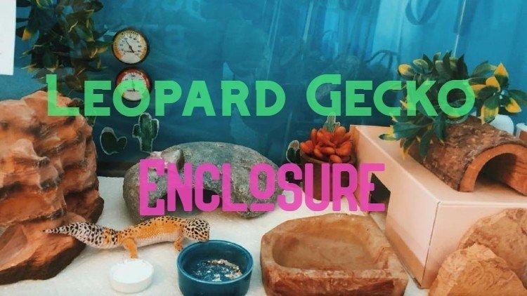 leoopard gecko enclosure