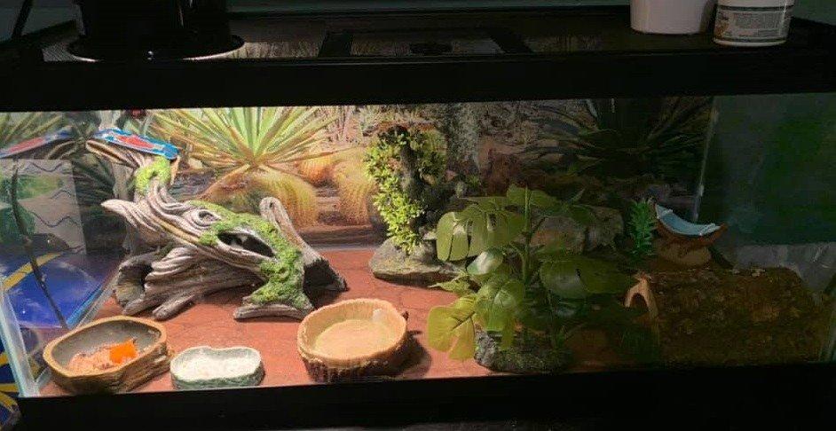 Leopard gecko setup