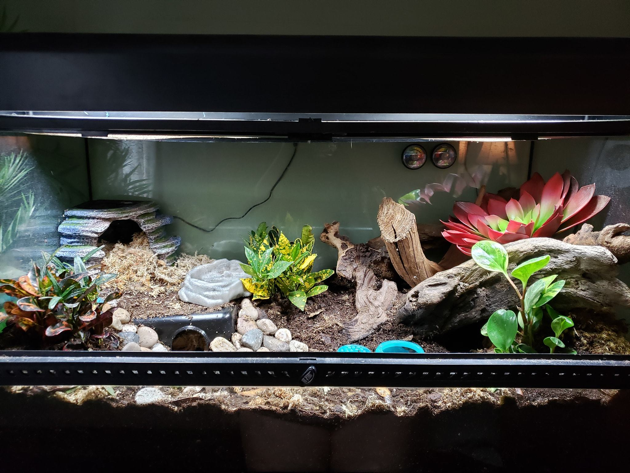 African fat tailed gecko cage setup