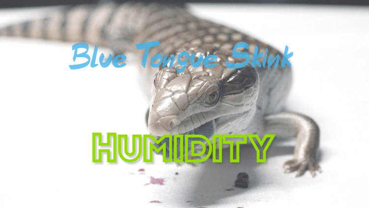 blue tongue skink humidity