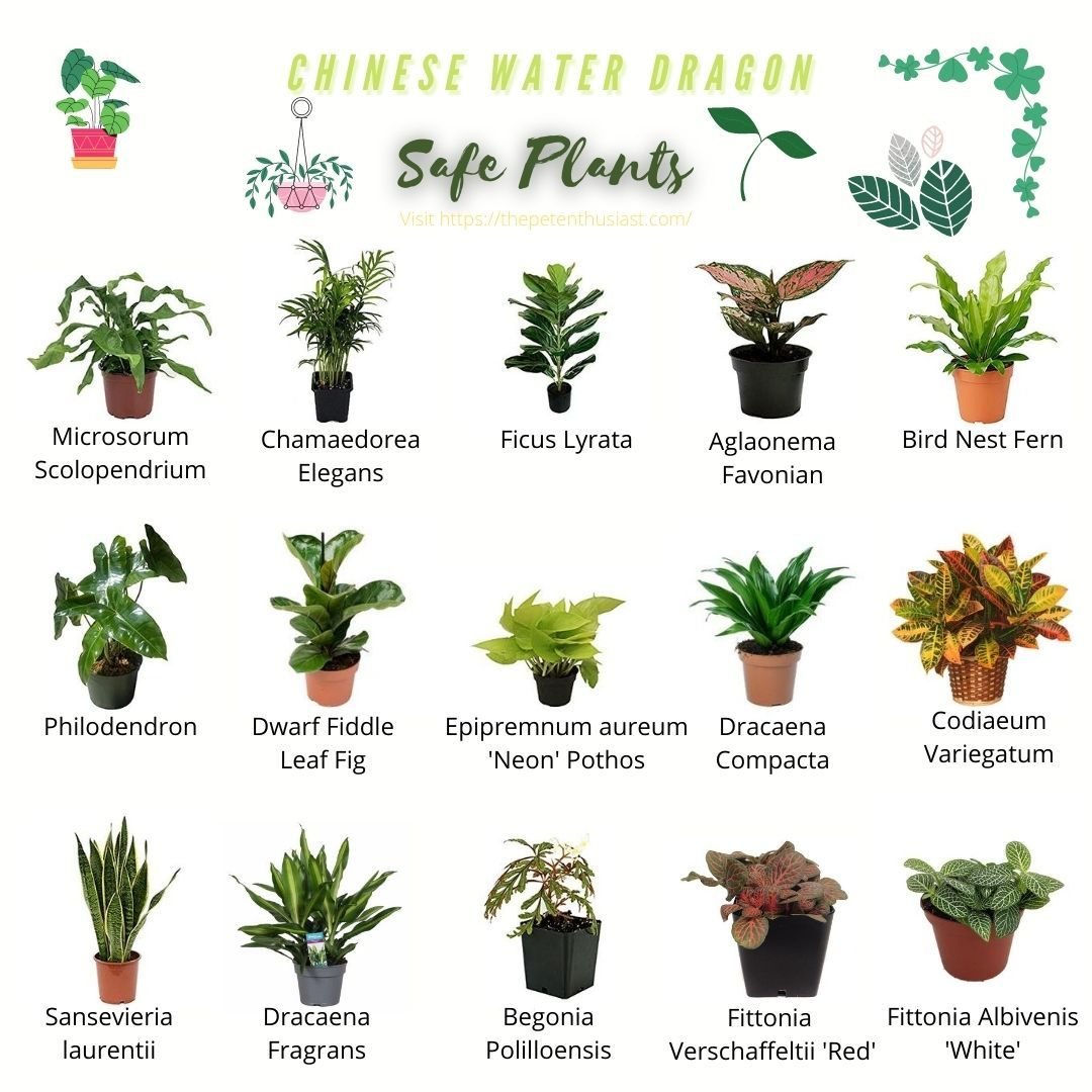 15 Best Safe Live Plants For A Chinese Water Dragon Terrarium