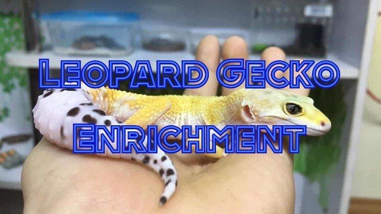 leopard gecko enrichment