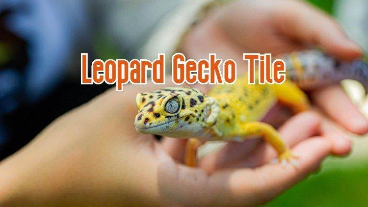 Gecko box by makena tile