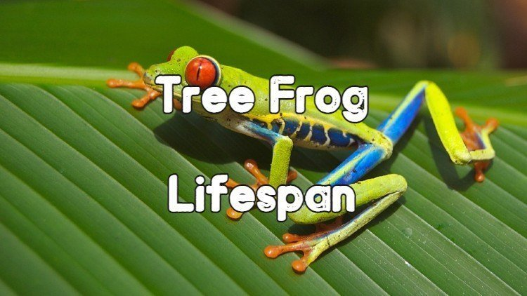 Lifespan of different tree frog species