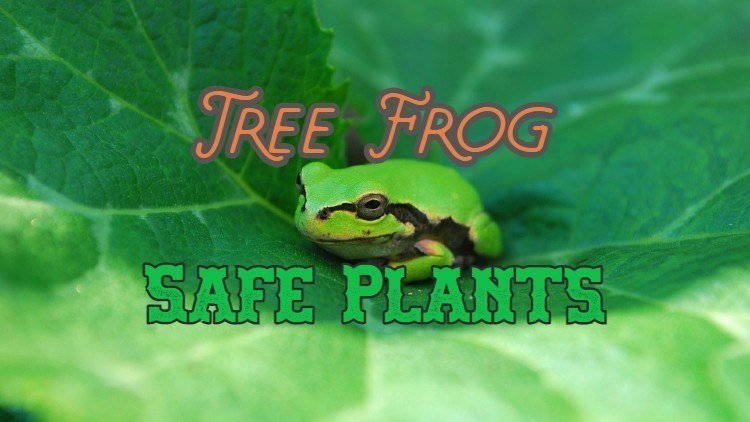 Best Tree Frog Live Plants