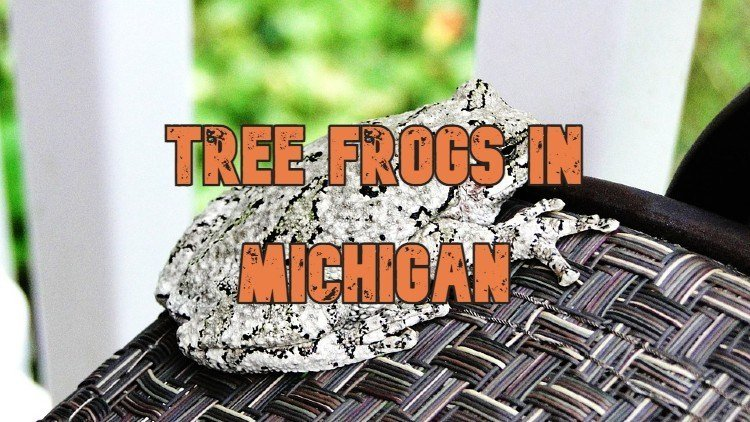 Tree Frog Sound In Michigan