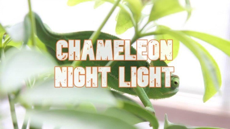 Chameleon Night Light