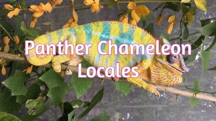 Panther Chameleon Locale List