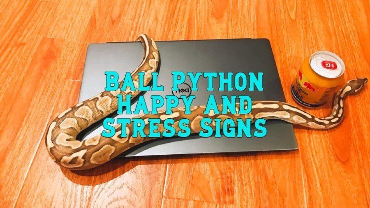 Ball Python Happy And Stress Signs