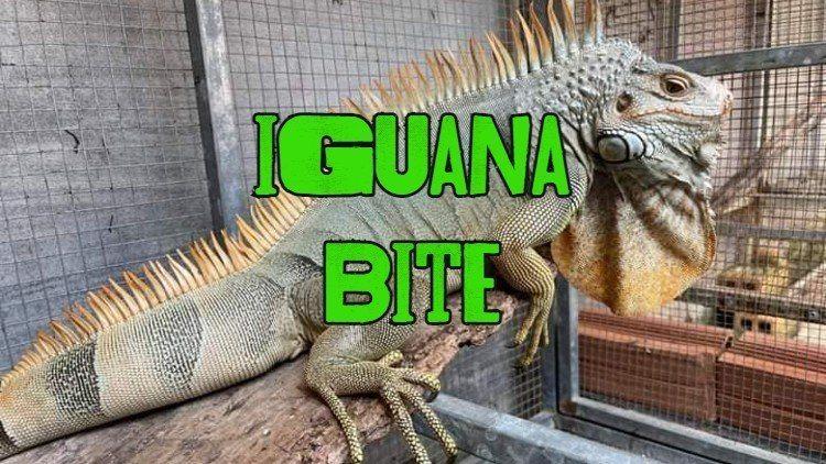 iguana bite