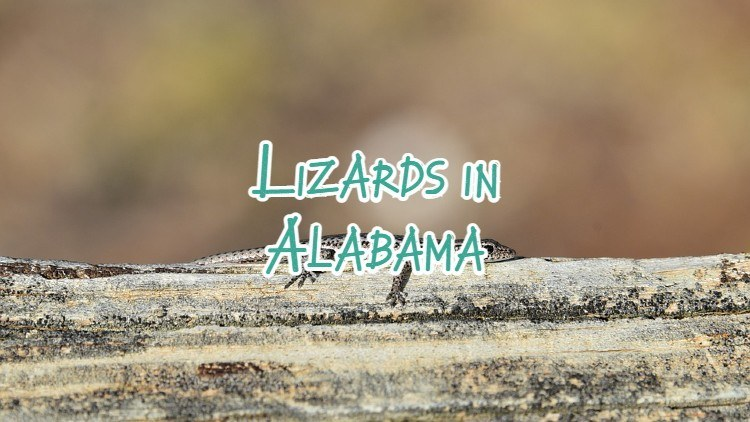 Lizards in Alabama