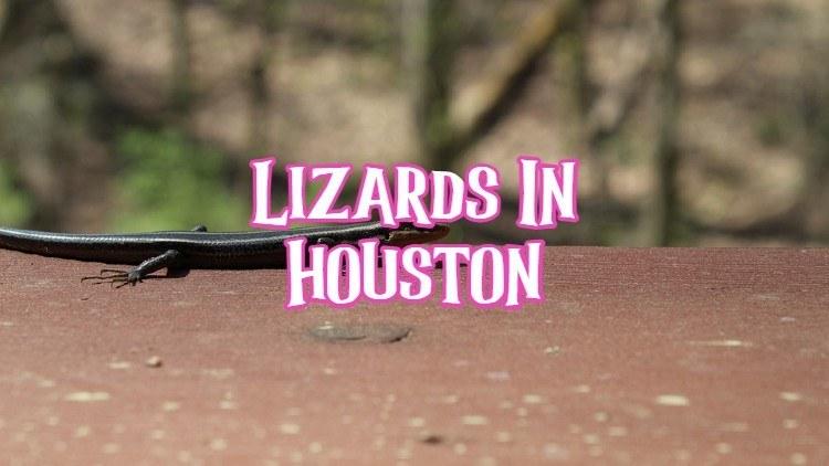 lizards in Houston