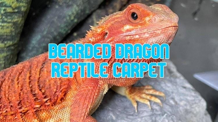 reptile carpet for bearded dragons