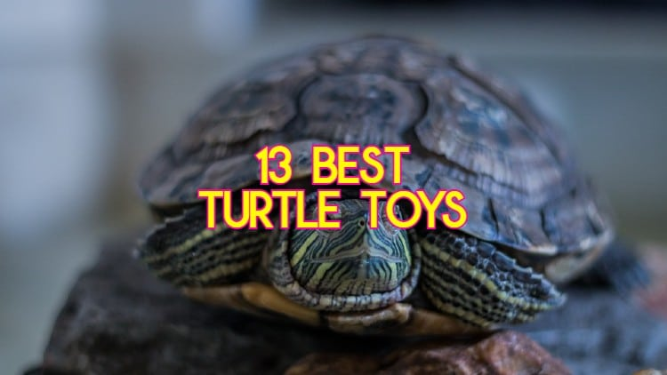 Toys For Turtles