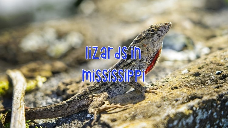 Lizards in Mississippi