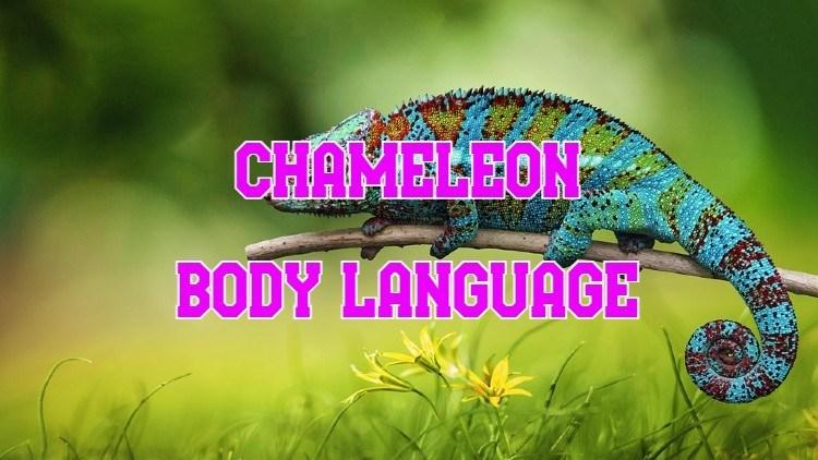 chameleon body language