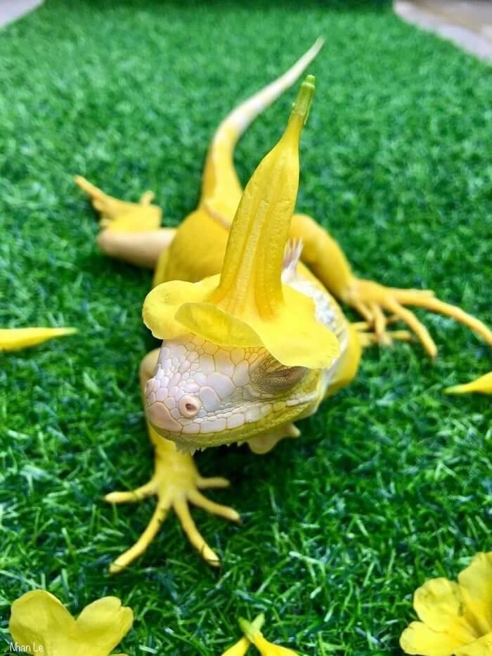 iguana cute