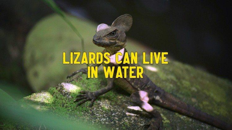 lizards live in water