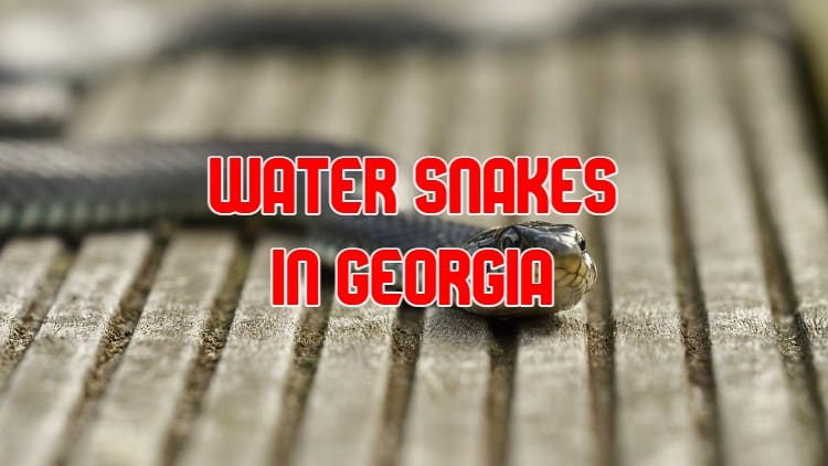 Water Snakes in Georgia