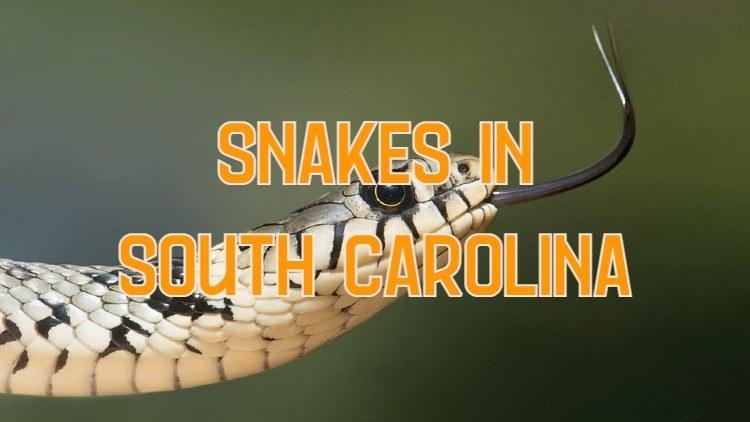 snakes in south carolina