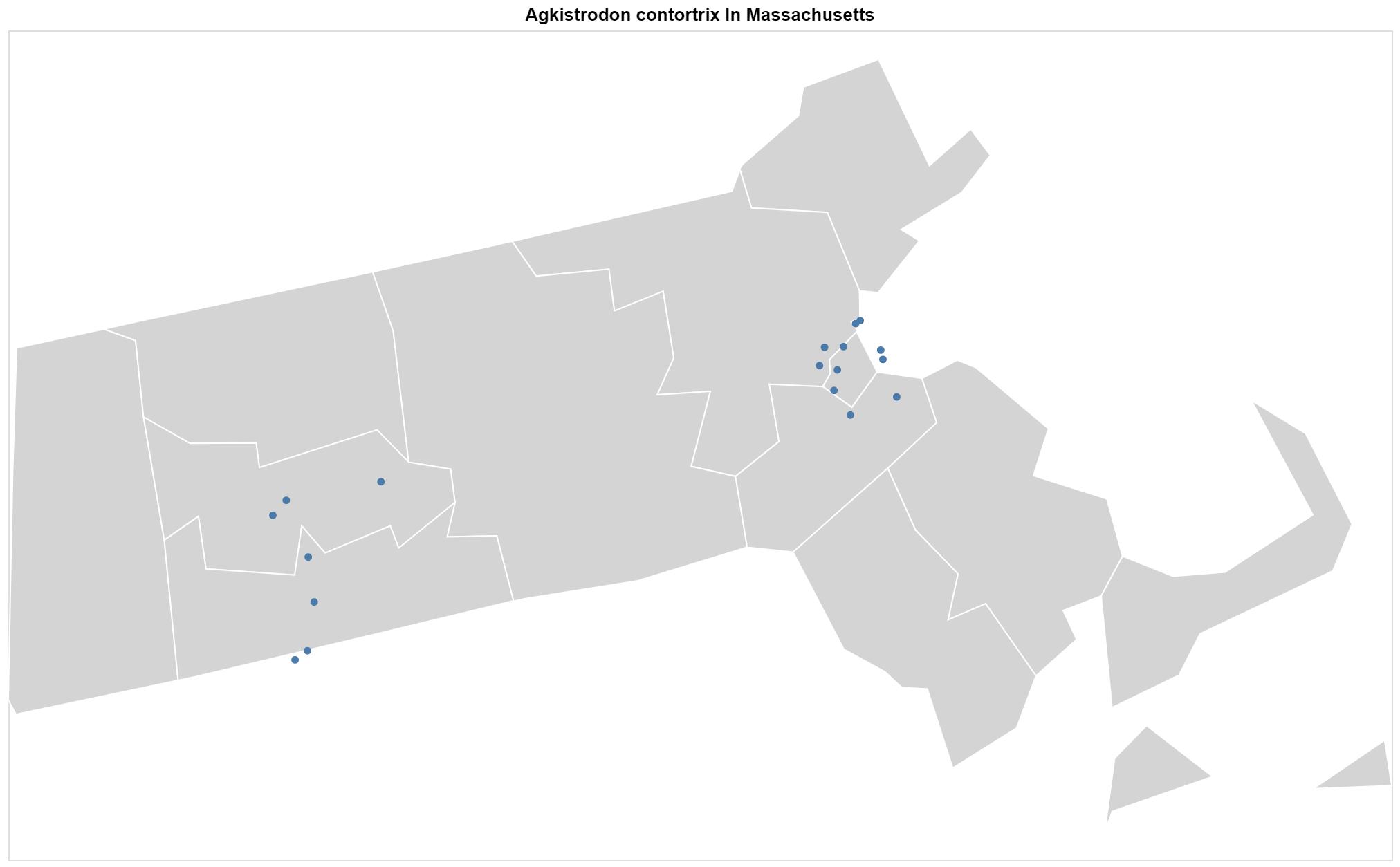 Agkistrodon contortrix Massachusetts map
